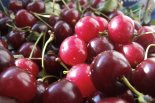Gyümölcs nagykereskedelem